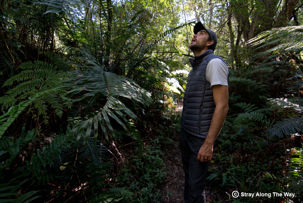 Evaluating the awesome Knysna Forest.