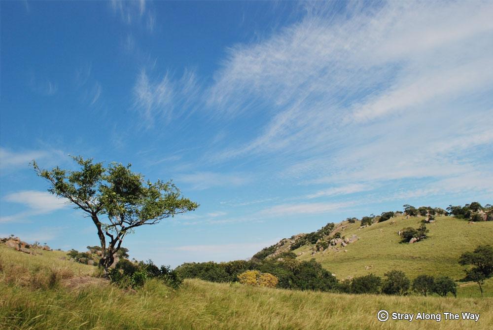 Ongoye Landscape