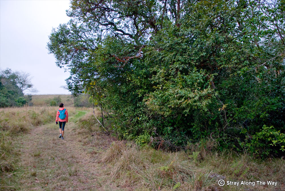 Jill exiting the forest on the uKhozi Trail.