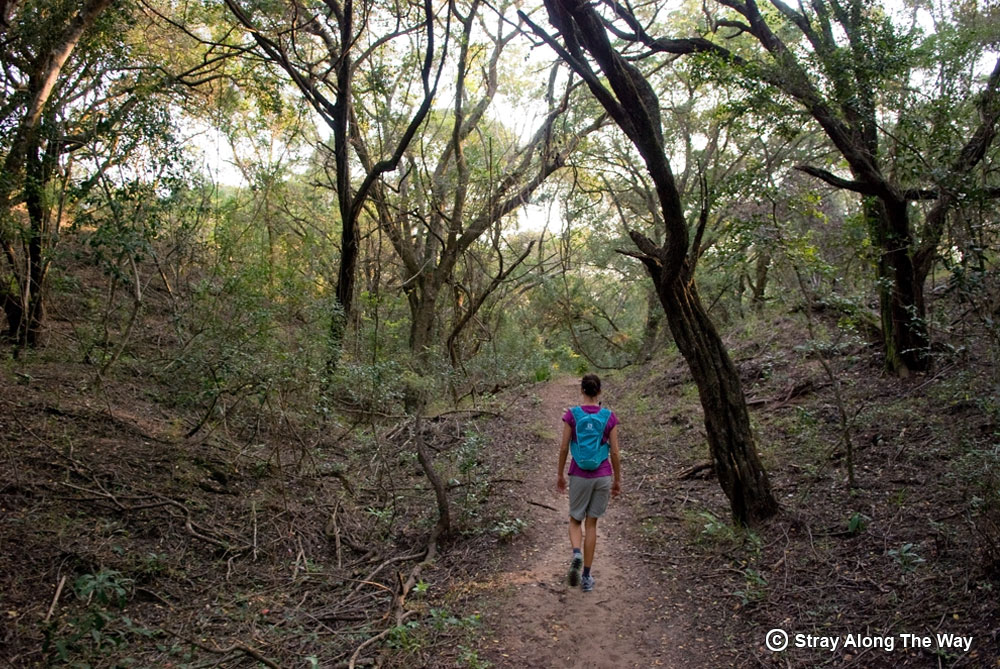 Jill on the Siyaya Trail in the Umlalazi Nature Reserve.