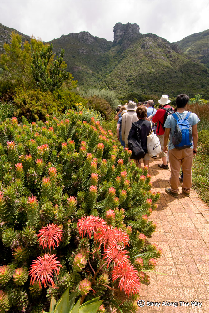 Kirstenbosch National Botanical Garden tour