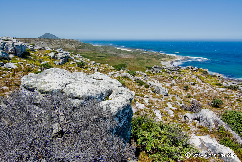 cape point nature reserve ocean view