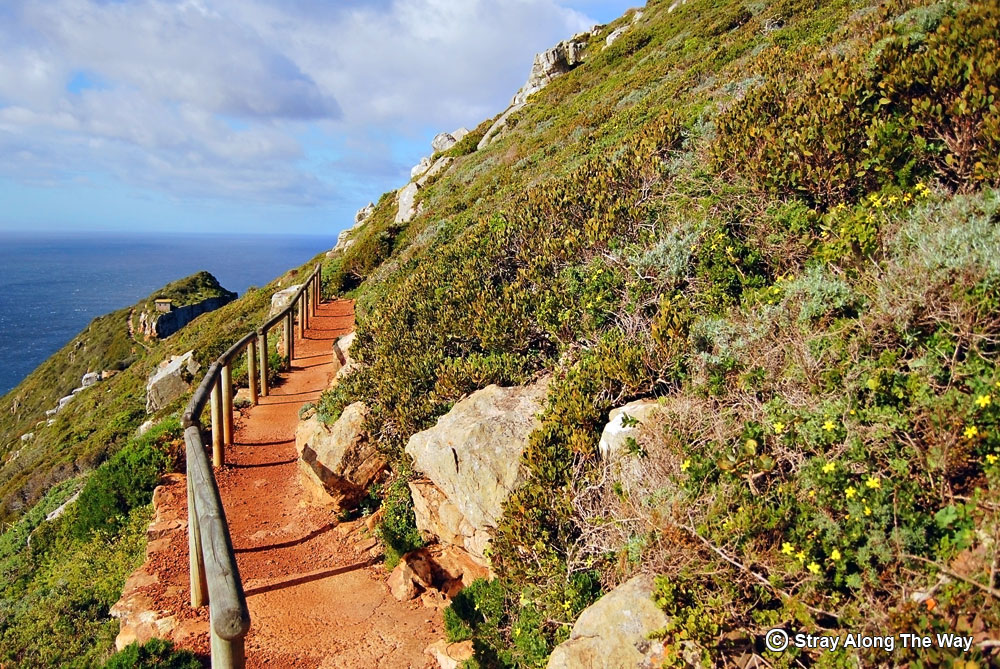 hiking trail cape point nature reserve