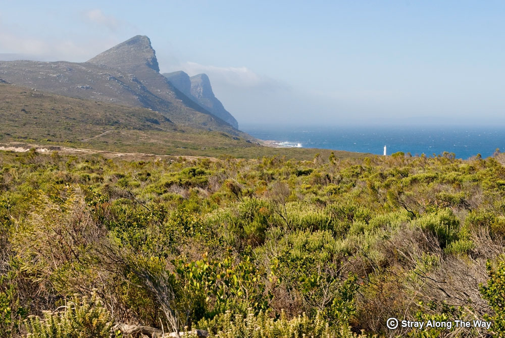 cape point nature reserve views