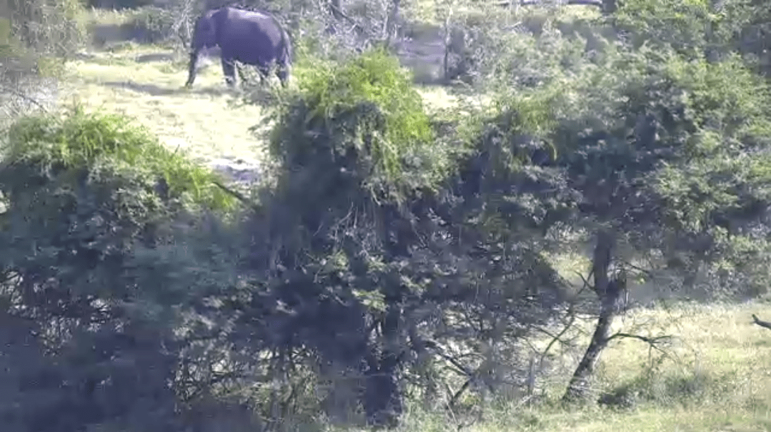 thembe game reserve bush webcam