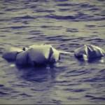 Mare Amarum. Misja Aquarius na Morzu Śródziemnym