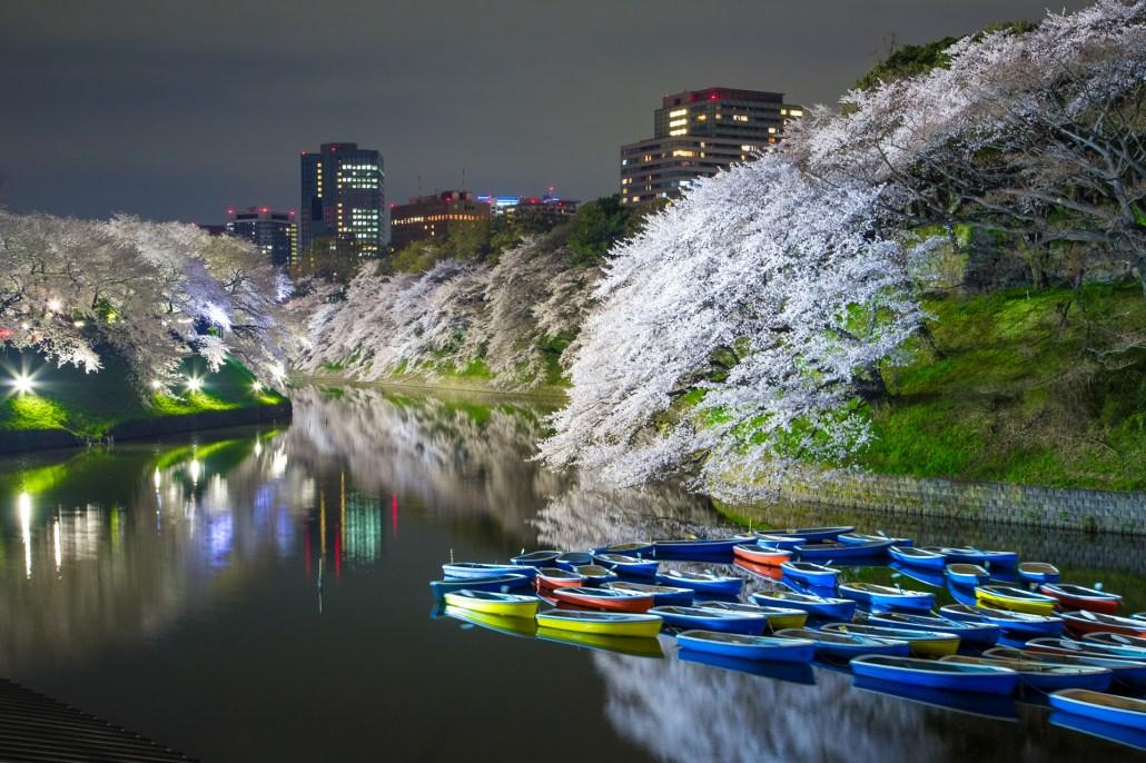 Cherry_Blossom_at_Chidorigafuchi