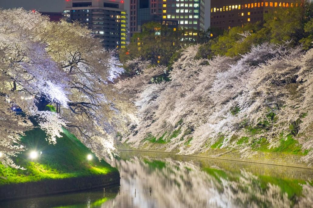 "Chidorigafuchi ""Sakura"""