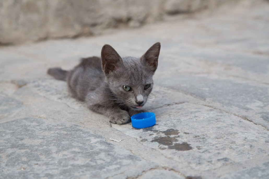 Tunisia cat at Tunis Medina area 4K(チュニジアの猫 4K)