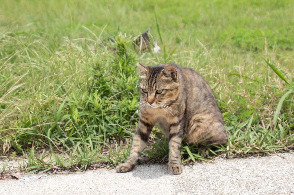 Cat at Ainoshima cat island Kikakyushu Kokura Fukuoka 1 4K 北九州小倉駅直結の船着き場から40分程度の所にある藍島。良質な漁場として釣り客を惹きつけると共に、手頃な「猫島」として猫ファンに人気。本画像は新型フルサイズ向け高倍率ズームレンズ 28-300mm F/3.5-6.3 Di VC PZD (Model A010)のレビュー用に掲載