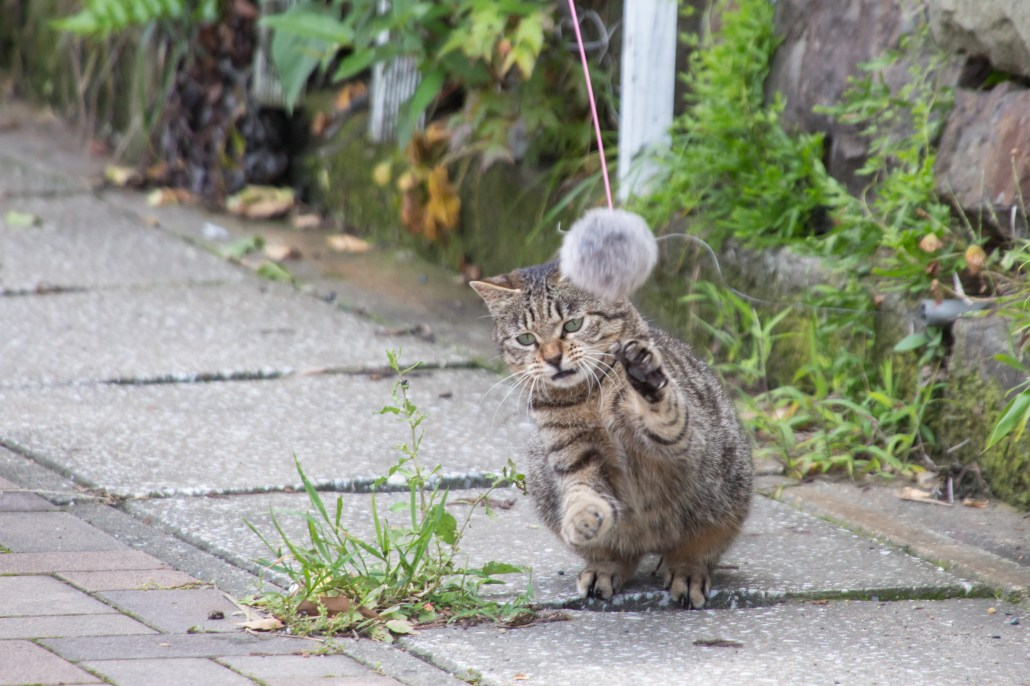 Cat at Ainoshima cat island Kikakyushu Kokura Fukuoka 2 4K 北九州小倉駅直結の船着き場から40分程度の所にある藍島。良質な漁場として釣り客を惹きつけると共に、手頃な「猫島」として猫ファンに人気。