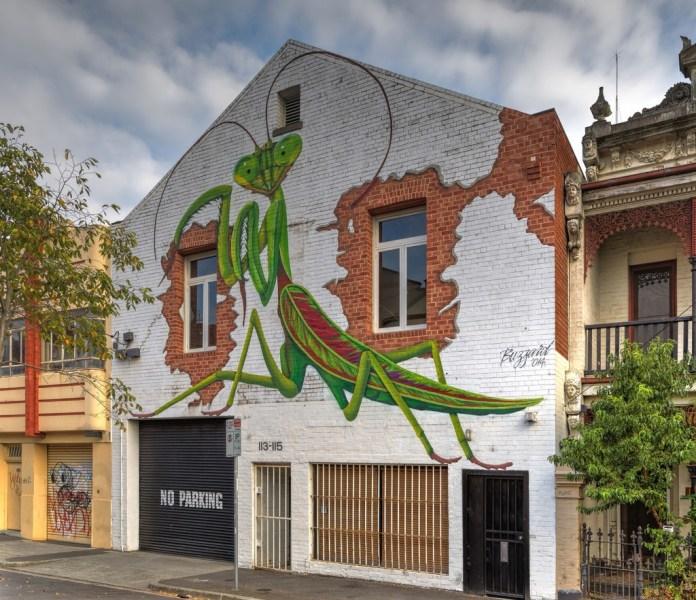 Parying Mantis – By Buzzard in Fitzroy, Australia