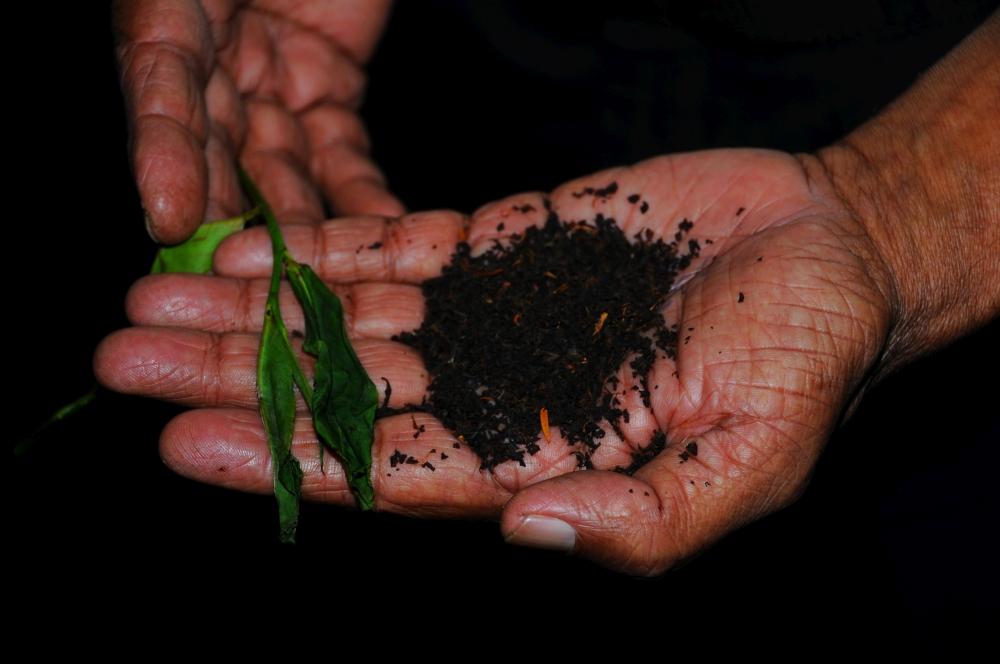 Srí Lanka je ostrovom čaju