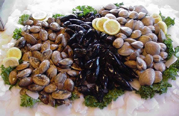 Small_mussels8