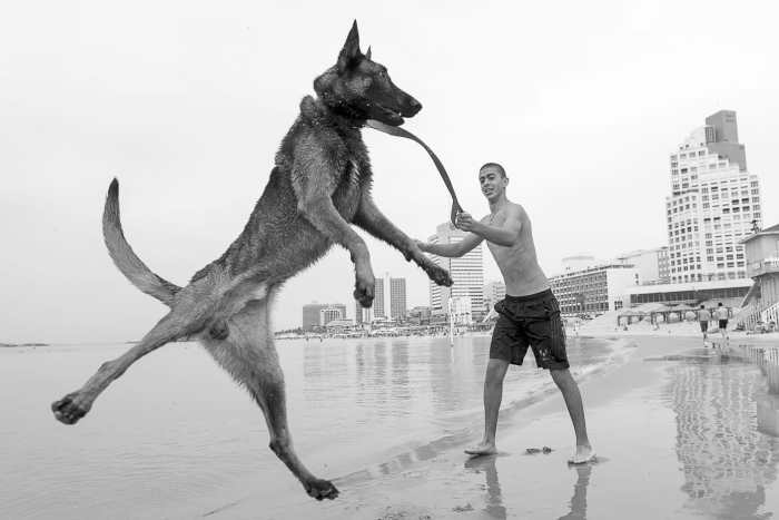 Dog Up by Ilan Burla