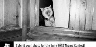 """June contest - Animals - """"Yawwwwn!"""" by Spyros Papaspyropoulos"""