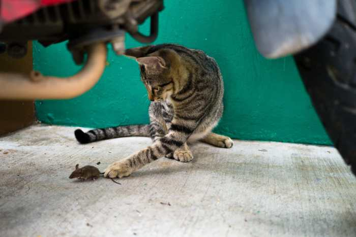 """Animals"" Street Photograph by Raymond Tanhueco"