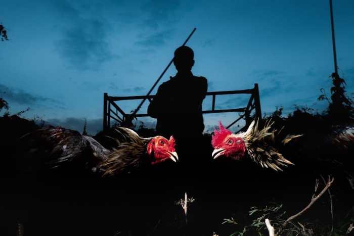 Photo by Tang Tawanwad Wanavit