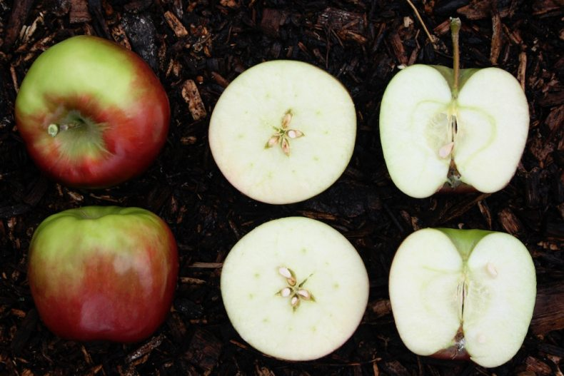whole apples and cut apples - how to store them properly
