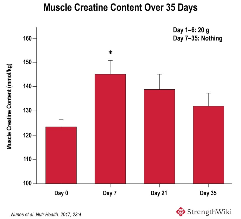 muscle creatine content