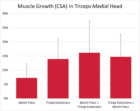 Muscle growth in triceps medial head
