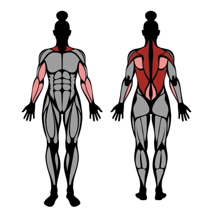 Muscles worked in barbell row exercise