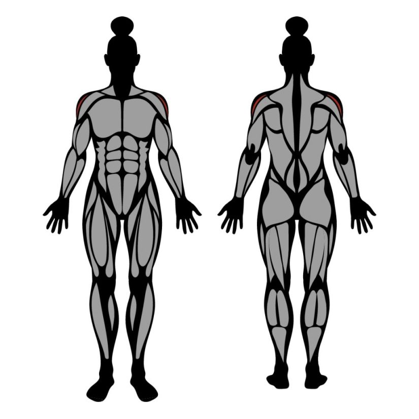 Muscles worked in dumbbell lateral raise exercise