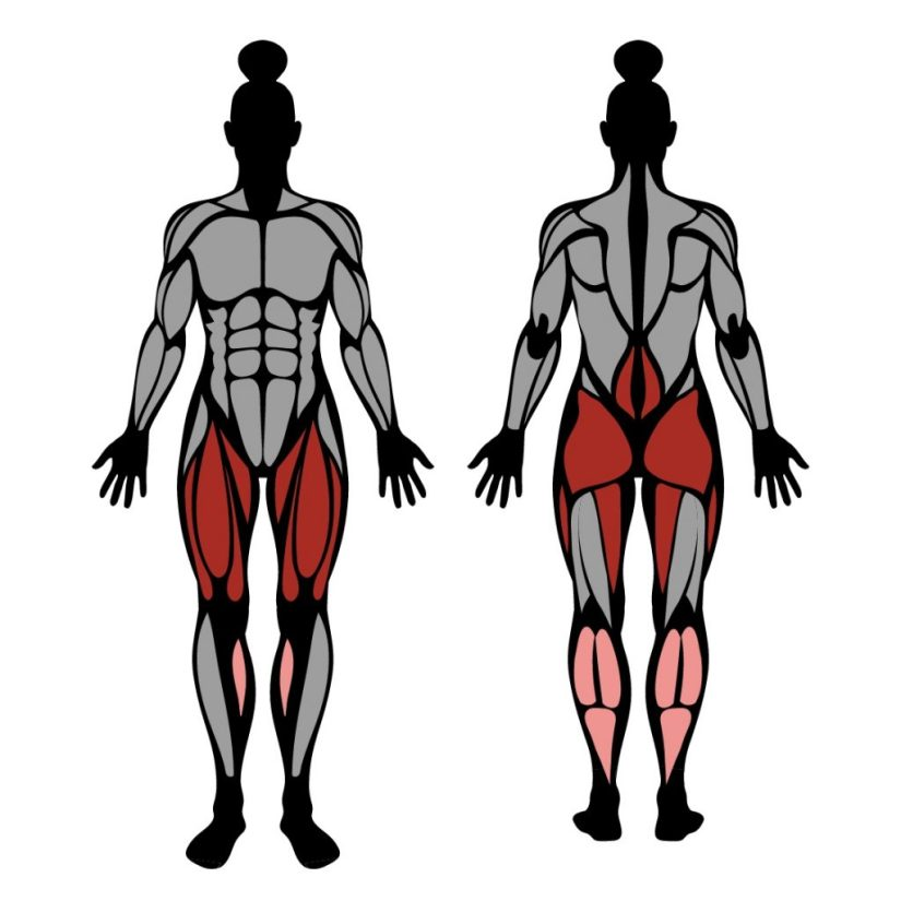 Muscles worked in the front squat exercise