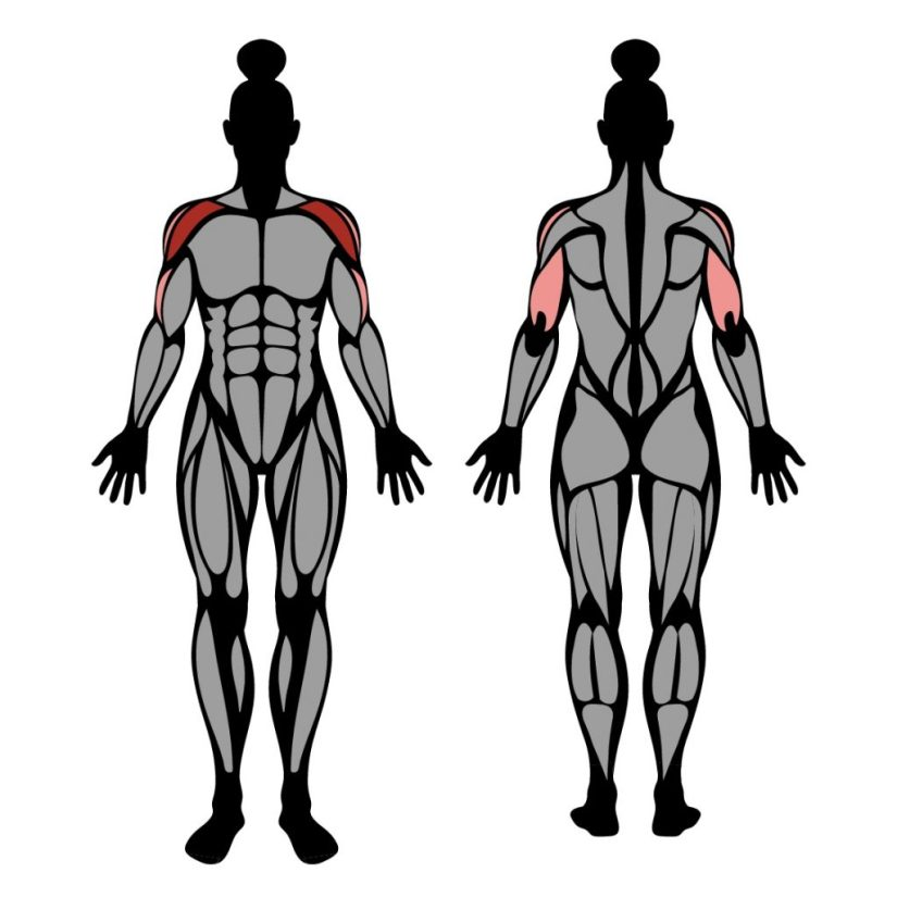 Muscles trained by dumbbell shoulder press exercise
