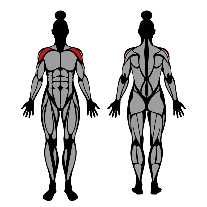 Muscles worked in barbell front raise