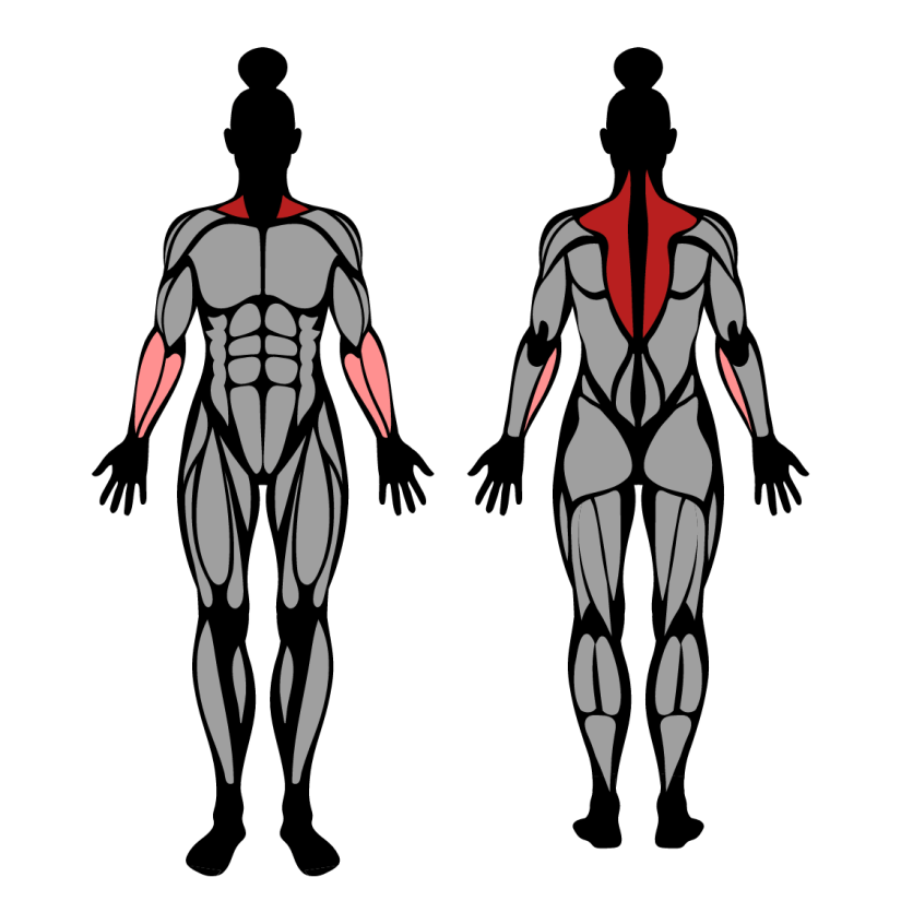 Muscles worked by barbell shrug