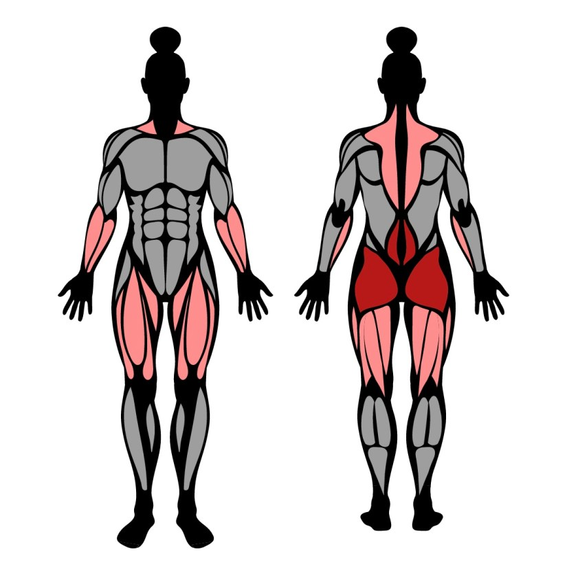 Muscles worked by deficit deadlifts