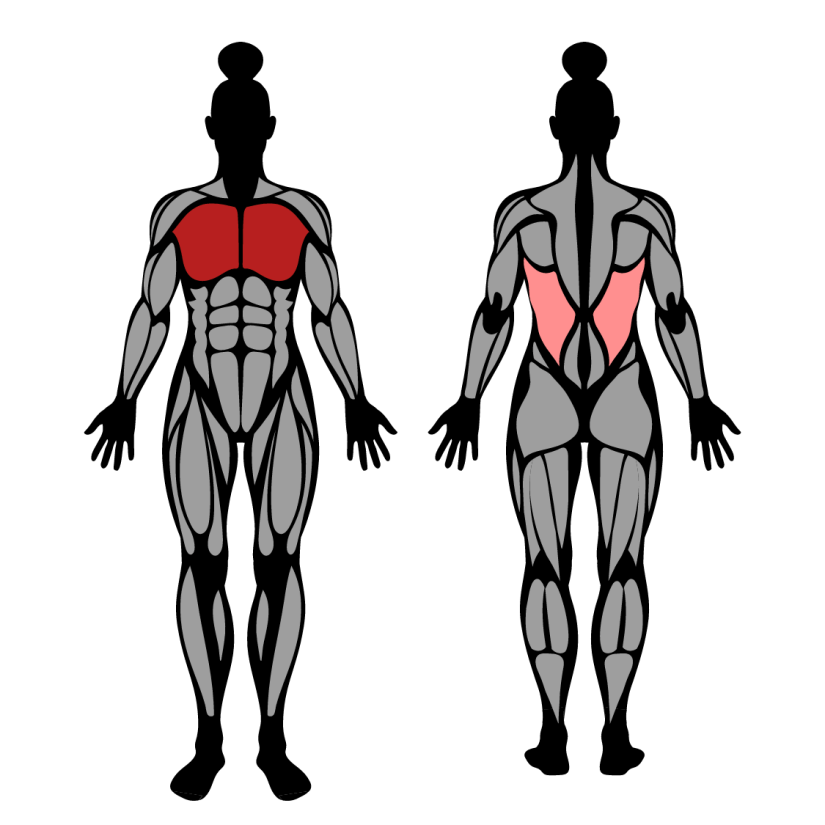 Muscles worked by dumbbell pullover