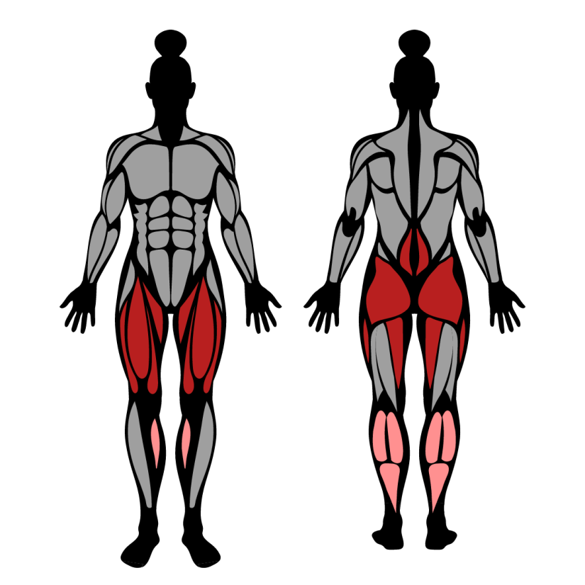Muscles worked by dumbbell squats