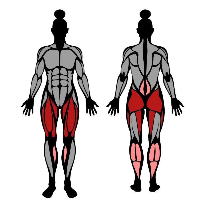 Muscles worked by goblet squat