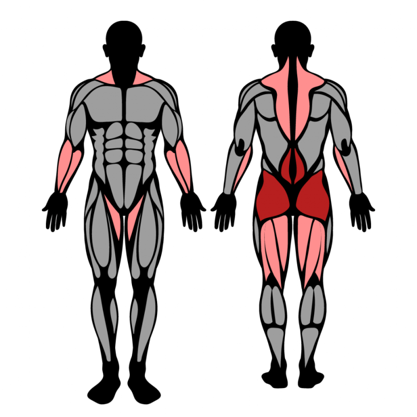 Muscles worked by hang power snatch exercise