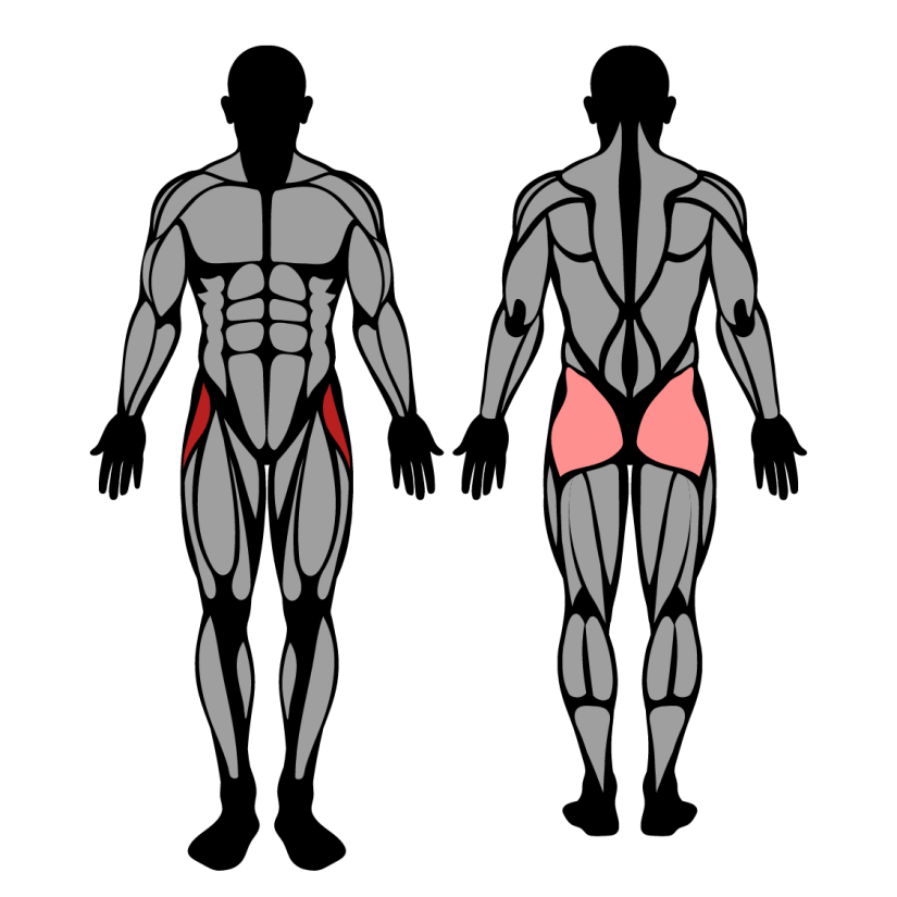 Muscles worked by hip abduction machine