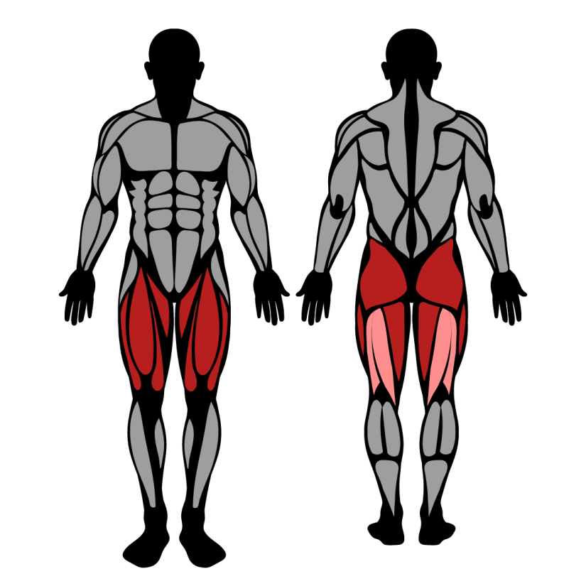 Muscles worked by leg press
