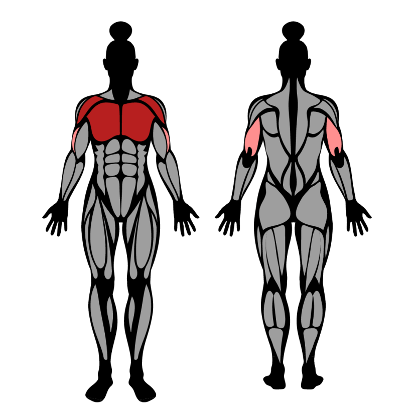 Muscles worked in machine chest press