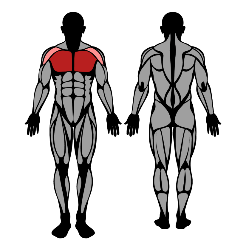 Muscles worked by pec deck