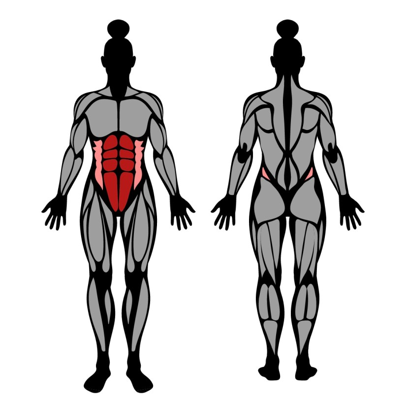 muscles worked in sit-ups