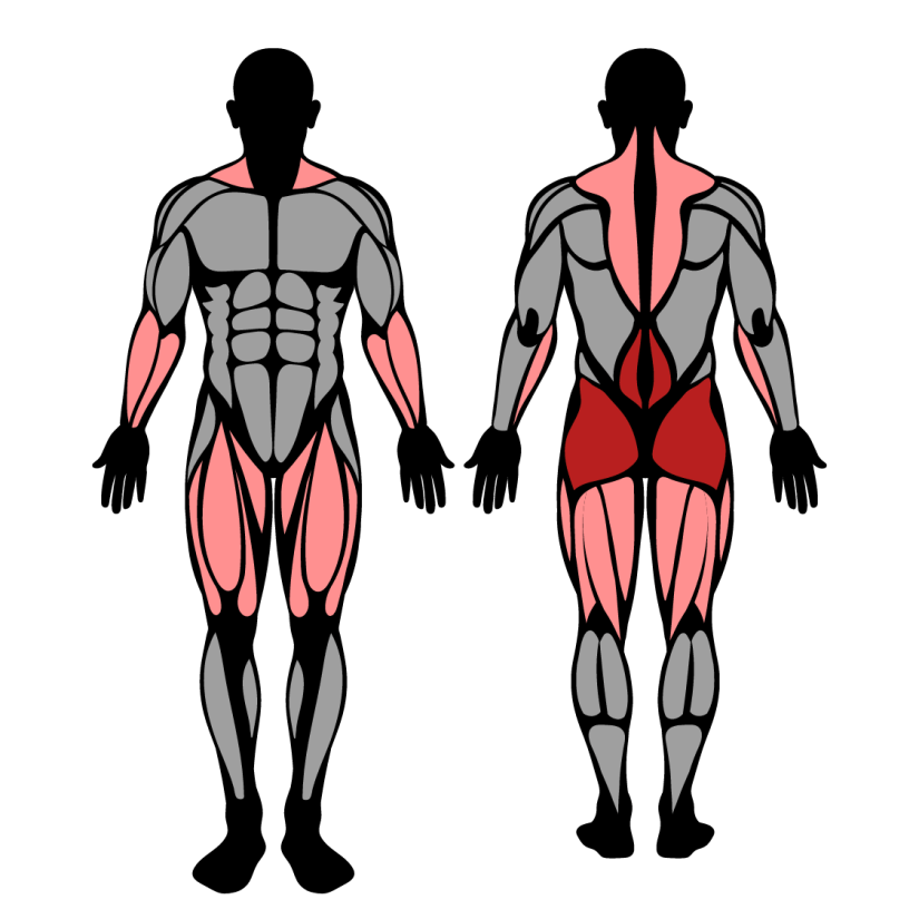 Muscles worked in snatch grip deadlifts