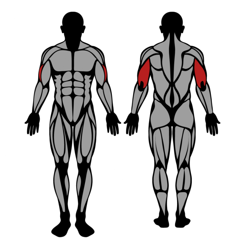 Muscles worked in Overhead Cable Triceps Extension