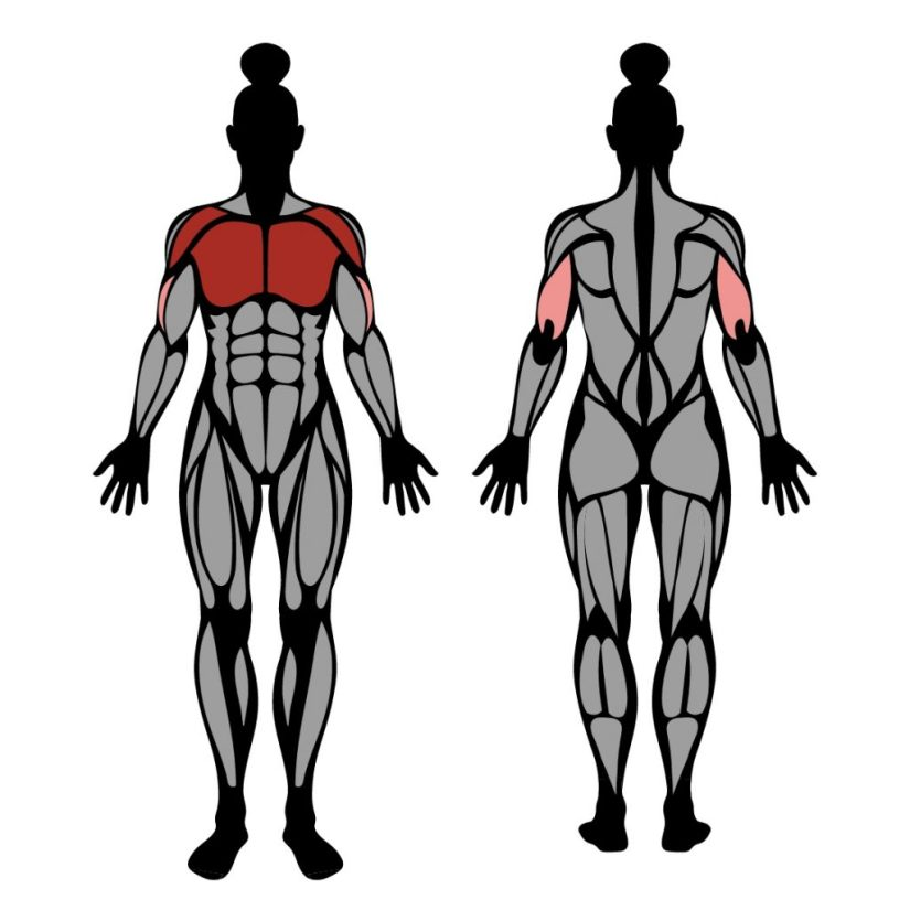 Muscles worked in smith machine bench press exercise