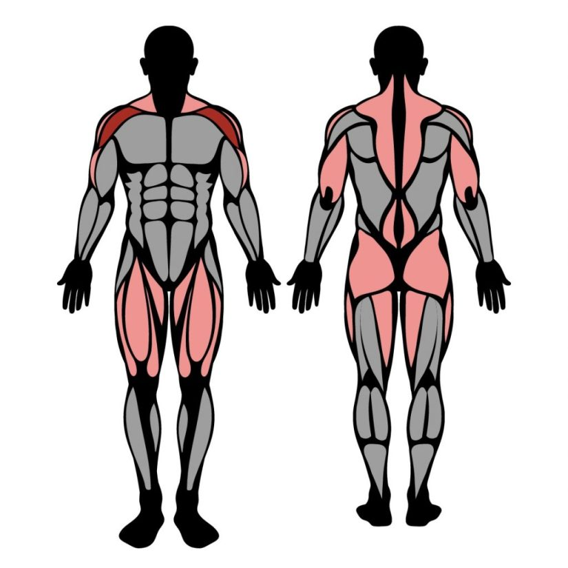 Muscles worked in the split jerk exercise