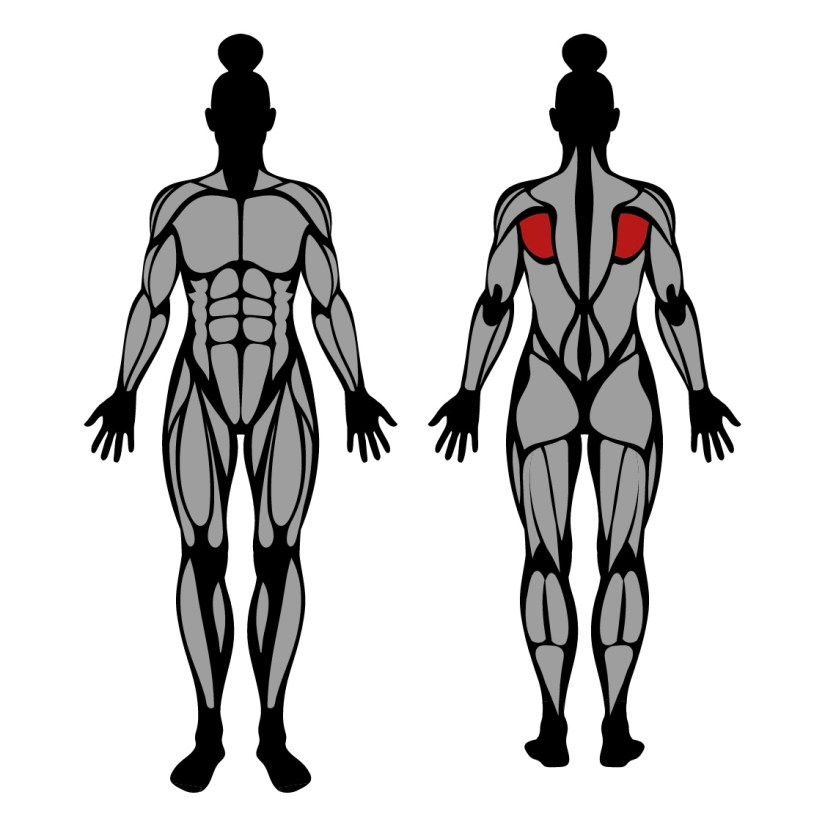 Muscles worked by dumbbell shoulder external rotation