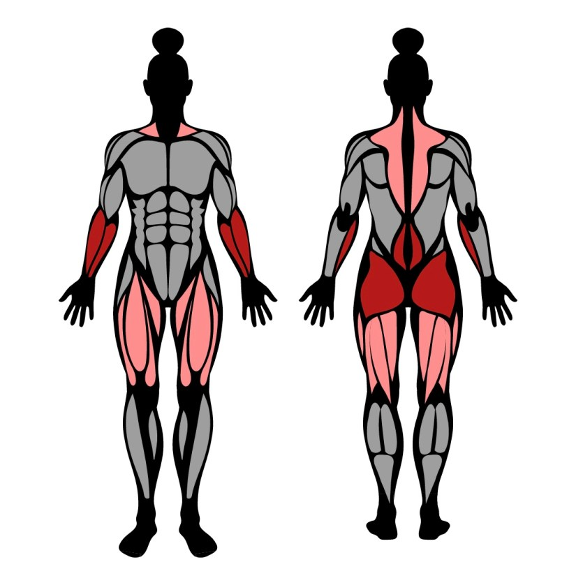 Muscles worked by fat bar deadlift