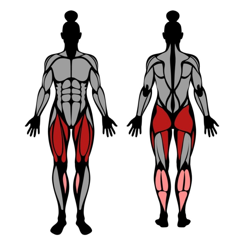 Muscles worked in half air squats