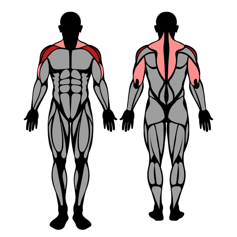 Muscles worked in behind the neck press
