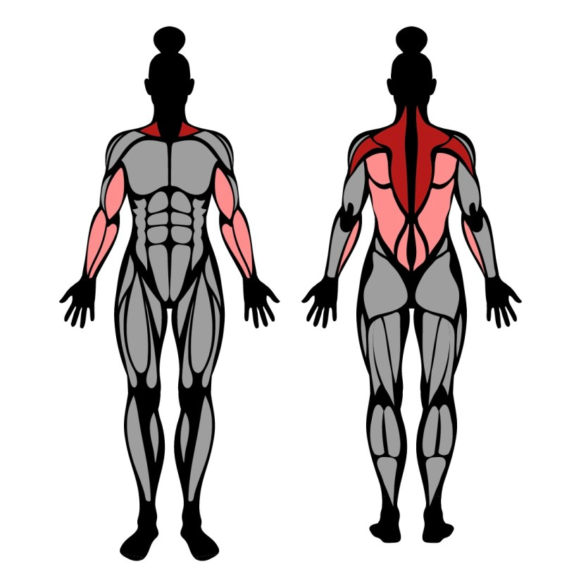 Muscles worked by dumbbell rear delt row